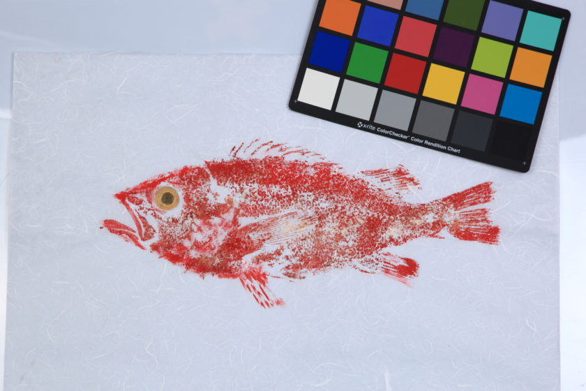 Le Gyotaku – L'art des empreintes de poissons par Christophe Doutriaux